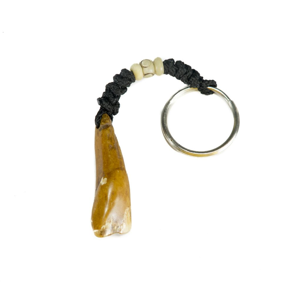 Bone key chain Yak tooth
